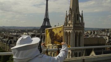 Foto de archivo de un apicultor con las abejas de Notre-Dame.