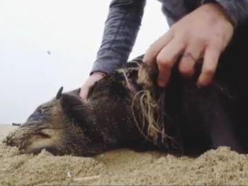 Retira un sedal a un foca en Namibia