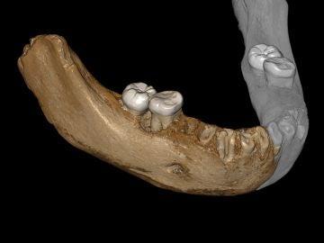La mandíbula inferior fosilizada que ha permitido el descubrimiento