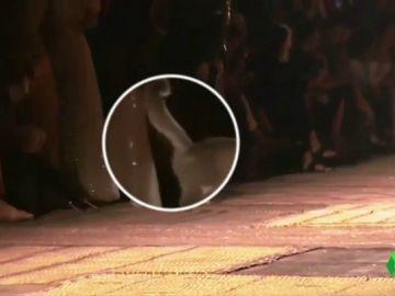 Un gato se cuela en un desfile de Christian Dior y marca con su orina a una asistente