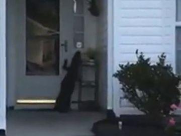 Las sorprendentes imágenes de un cocodrilo que intenta llamar al timbre de una casa en Carolina del Sur