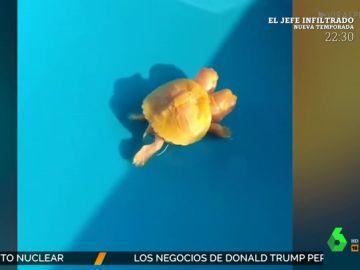 De tortugas con dos cabezas o cabras con tres cuernos: los animales más extraños que nos da la naturaleza
