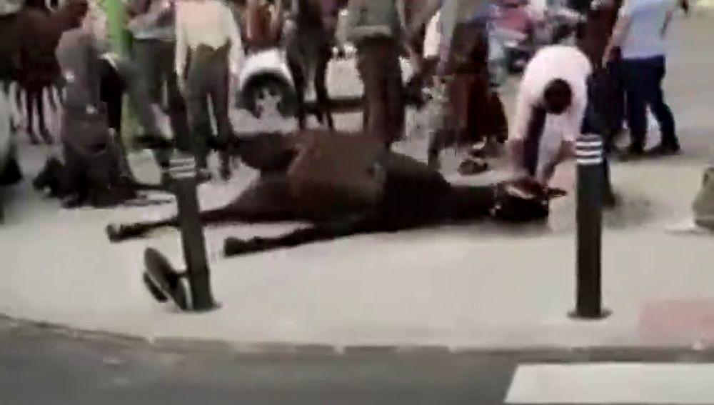 Impactantes imágenes: un caballo convulsiona en la Feria de Abril de Sevilla