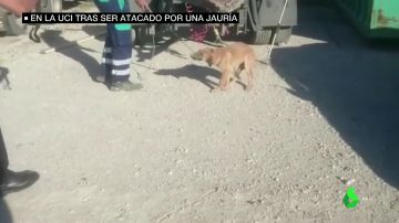 Un joven permanece en la UCI tras ser atacado por una jauría de perros en Málaga