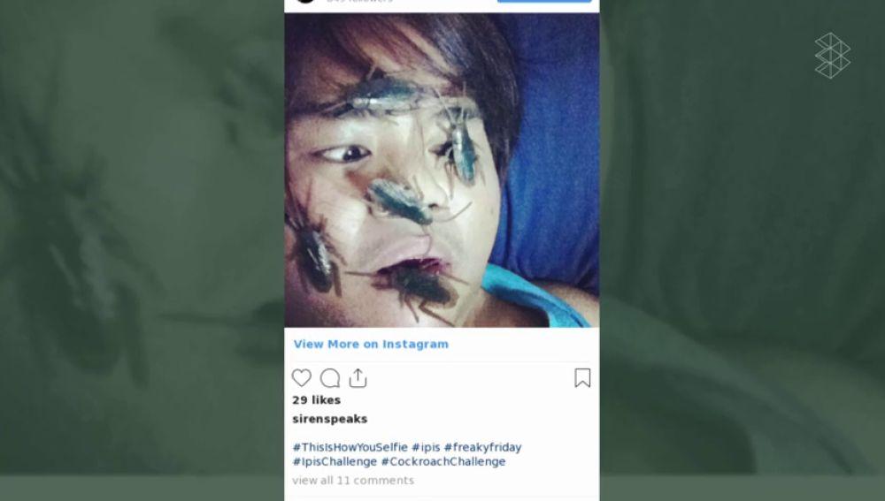 Cockroach challenge: ¿por qué se ha puesto de moda fotografiarse con una cucaracha en la cara?