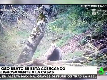 Alerta en los montes de Liébana, Cantabria, por la presencia de un oso cerca de las viviendas
