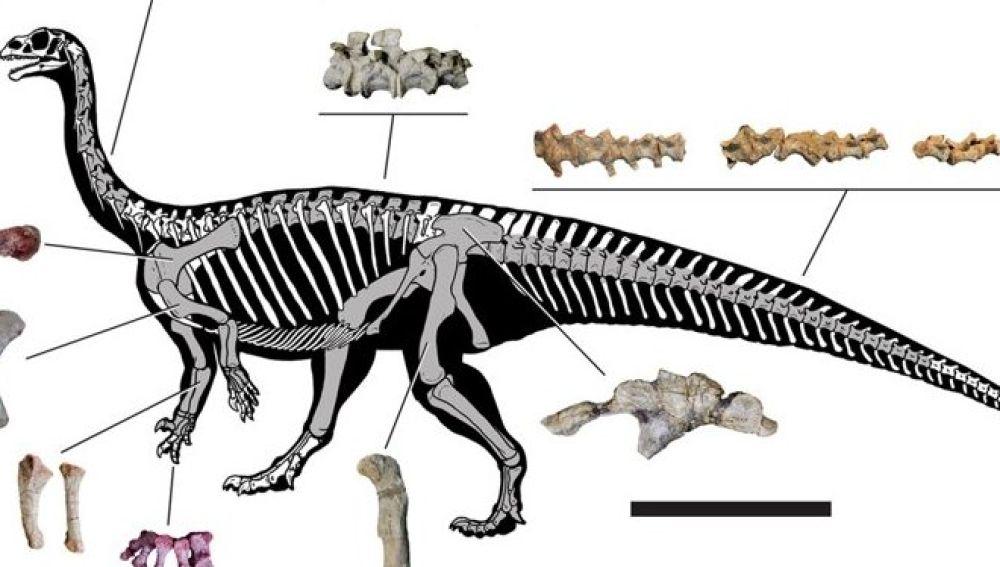 El Mussaurus patagonicus