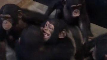 Leo abrazando a sus nuevos amigos