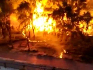 Provocan un incendio en Palencia por prender fuego a las pelusas de los árboles
