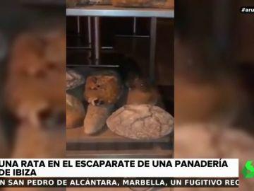 Graban a una rata 'paseándose' por el escaparate de una panadería de Ibiza