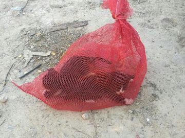 Las dos crías de gato rescatadas del interior de un vehículo en Murcia