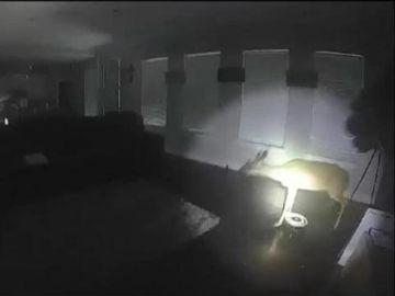 Imagen del ciervo en el interior de la casa