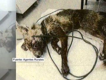Condena pionera de seis meses de cárcel y 2.000 euros de multa por maltratar a un animal salvaje