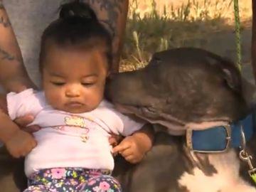 La Pitbull Shala y la bebé Mashailah, tras el incendio