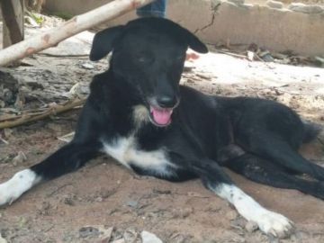 El perro Ping Pong que rescató a un bebé en Tailandia