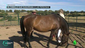 Los caballos como espejos de las emociones: una terapia para encontrarte a ti mismo