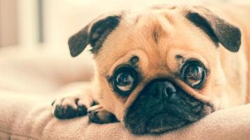 Un perro triste