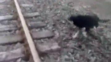 Un maquinista detiene el tren para rescatar a un perro al que habían encadenado a las vías