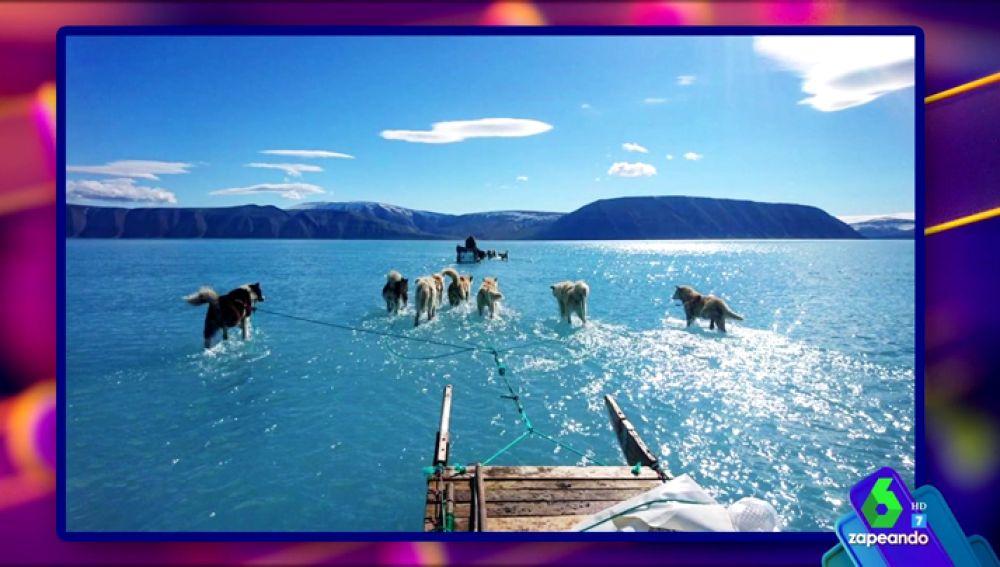 La imagen que mejor refleja el drama del cambio climático: un grupo de perros corriendo sobbre hielo derretido en Groenlandia