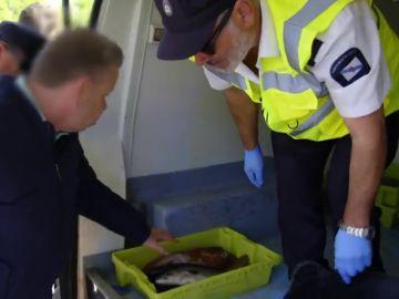 Chicote descubre varios cargamentos ilegales de marisco junto a los guardacostas gallegos