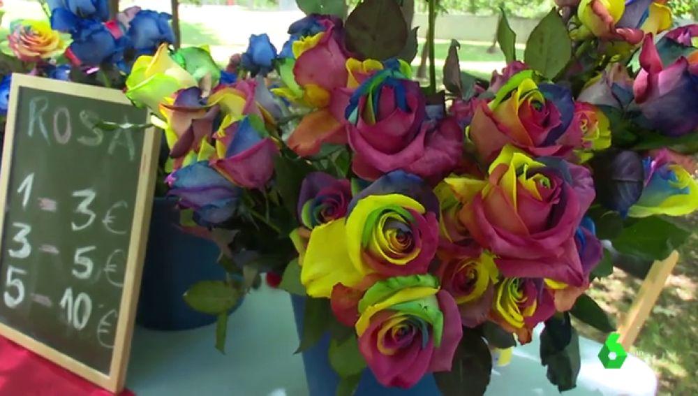 Rosas con los colores LGTBI