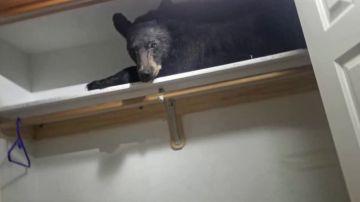 Un oso se cuela en una casa y se queda dormido en el armario