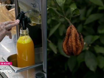 Imagen del contraste de la naranja en nuestro país: grandes beneficios por el zumo en supermercados, mientras en el campo se pudren