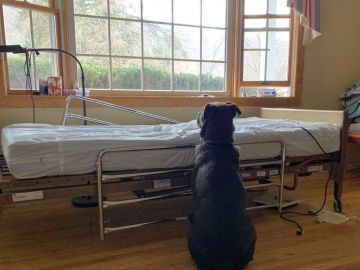 Moose, el pequeño labrador que no dejó de esperar a su dueño fallecido frente a su cama del hospital