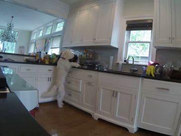 Instala una cámara oculta en la cocina para pillar a su hija robando galletas pero descubre que es el perro