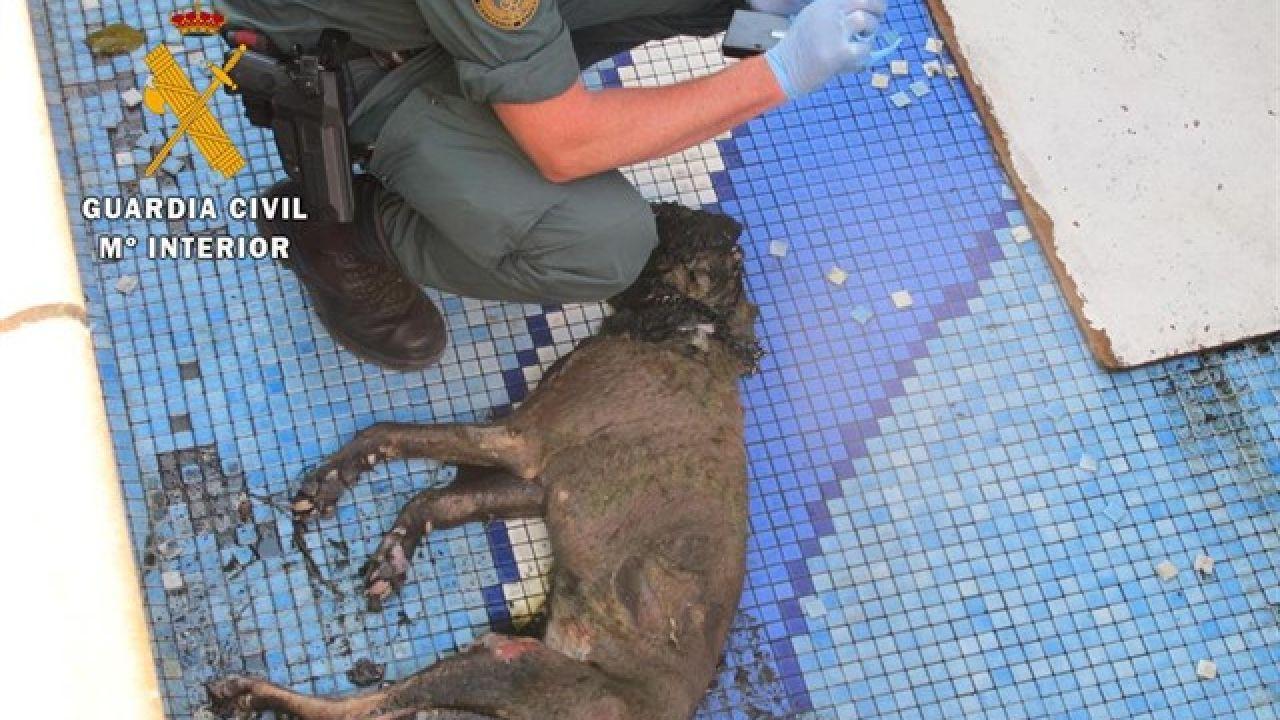 Hallan muerto a un perro por inanición