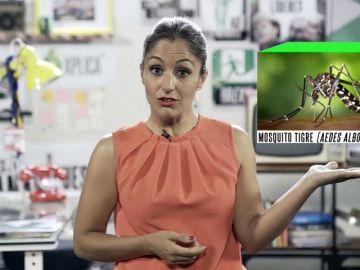 Mosquito tigre: qué hacer si te pica y cómo identificarlo