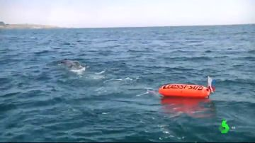 Los submarinistas piden que las embarcaciones amplíen a 100 metros la distancia de seguridad