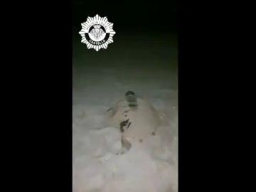 Una tortuga marina deposita huevos en una playa de Castellón, suceso que ha ocurrido solo cinco veces en 200 años