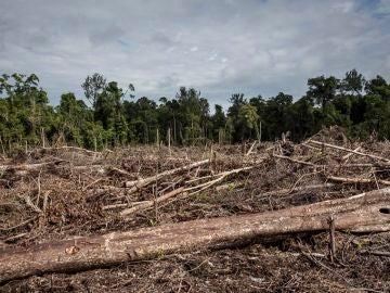 Imagen de la deforestación en Indonesia