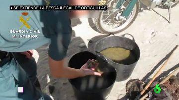 Incautación de ortiguillas de mar