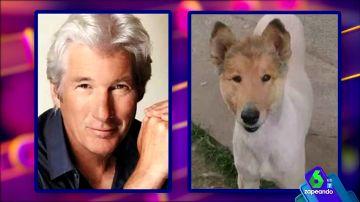 Parecidos entre los famosos y los perros