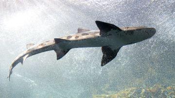 Imagen archivo tiburón