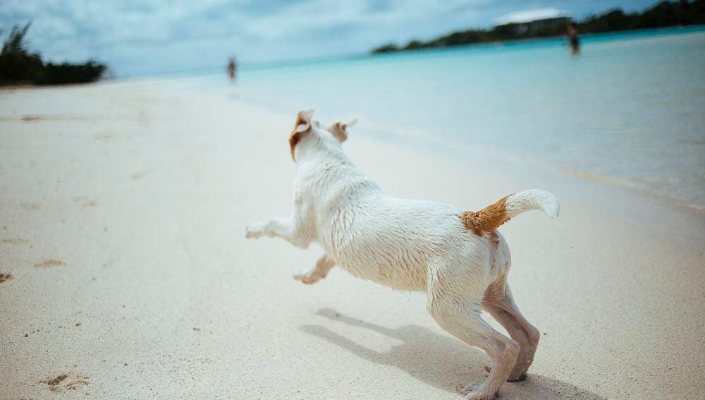 Playas caninas