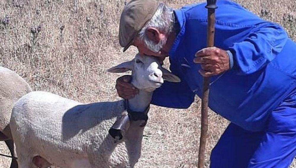 Guillermo Cana con una de sus ovejas.