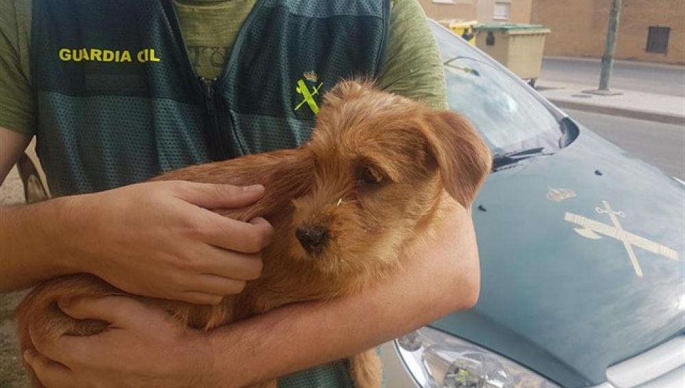 Dos personas investigadas por lanzar un perro por un puente