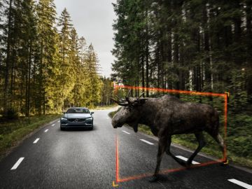 Cruzarse con un animal por la carretera