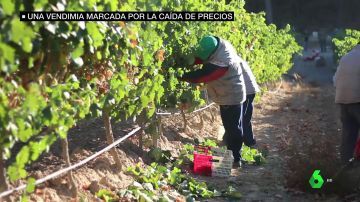 Los agricultores denuncian el bajo precio de la uva