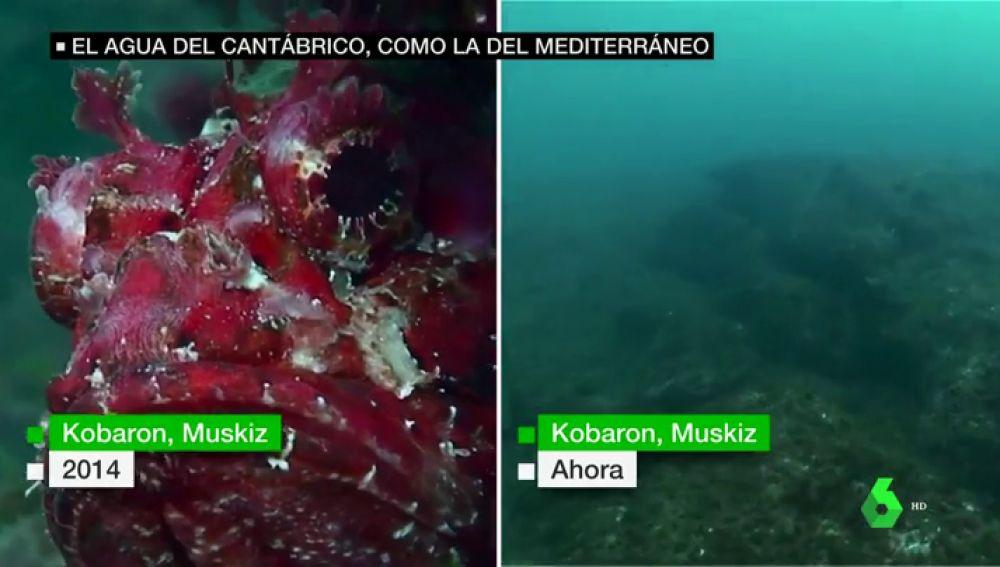 El agua del Cantábrico, a la misma temperatura que la del Mediterráneo