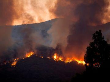 Imagen del incendio en Estepona producido pocos días antes que el de Marbella.