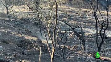 Imagen del incendio de Gran Canaria