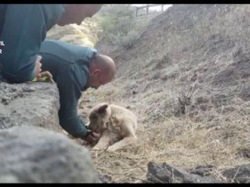 El perro rescatado mientras que bebe agua de la mano de uno de los guardias civiles.