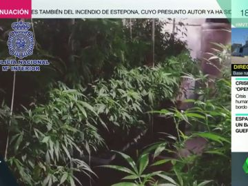 Así son los cultivos de marihuana que proliferan en España: la Policía ha desmantelado 300 desde febrero