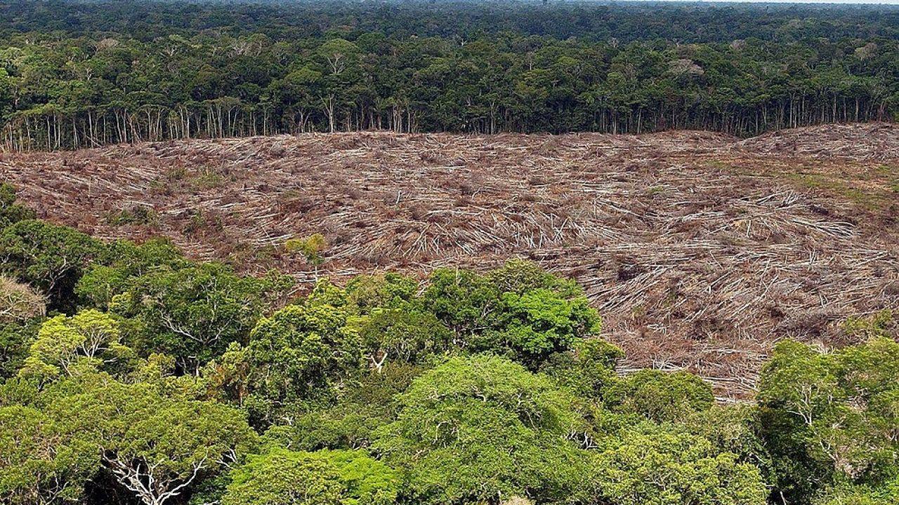 Clima, salud vegetal y bienestar humano, más conectados que nunca