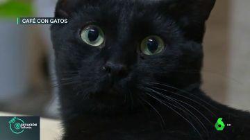 gatoteca