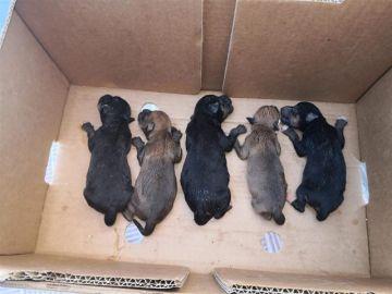 Cachorros encontrados en un contenedor de basura de Alcalá de Guadaíra